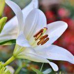 voorjaar bloem