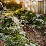 De beste artikelen voor in je tuin